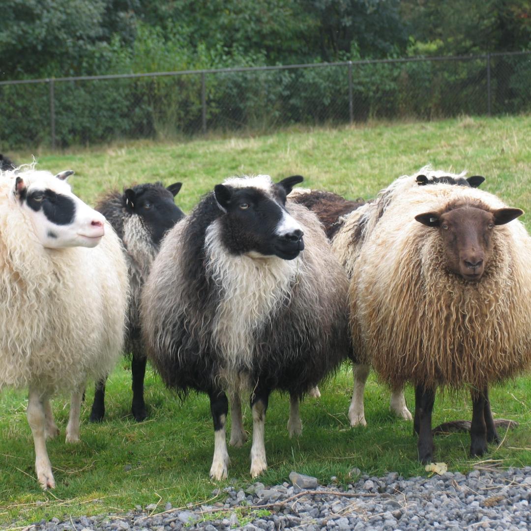 Fjölskyldu- og húsdýragarðurinn